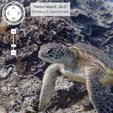K-12 View the world from beneath the waves with Google Oceans.